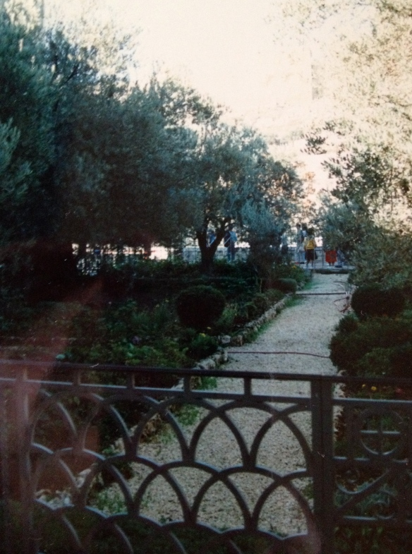 The Garden of Gethsemane where Jesus prayed His highly priestly prayer found in John 17.